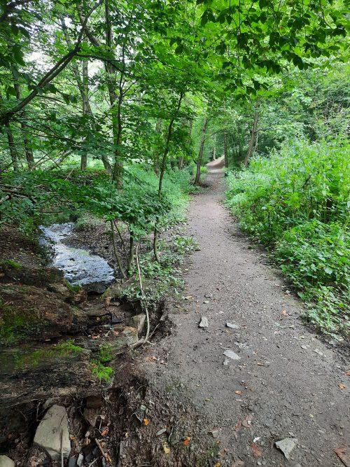 Wald in Wülfrath Düssel